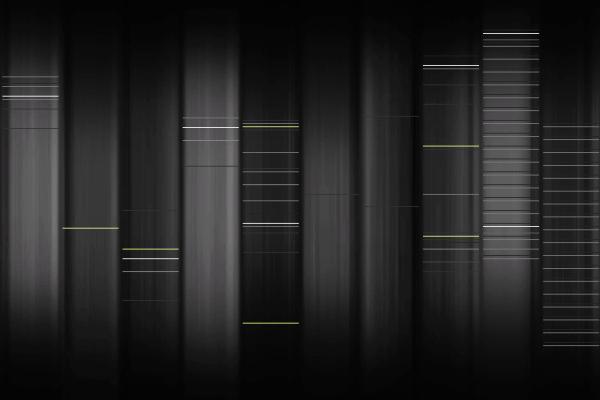 Web DNA