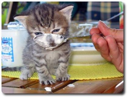 KittyPredi.jpg
