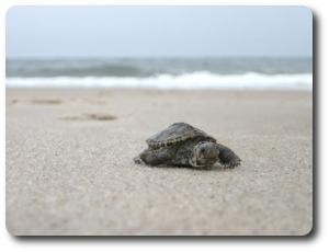 turtlette1.jpg