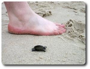turtlette2.jpg