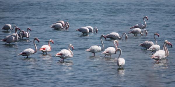 almeria-flamingo2.jpg