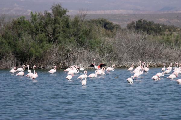 almeria-flamingo.jpg