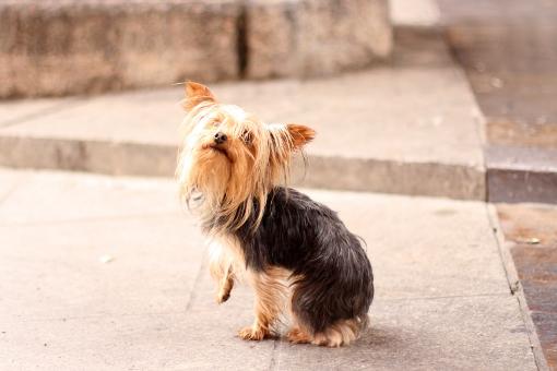 Смешно кученце от Кордоба