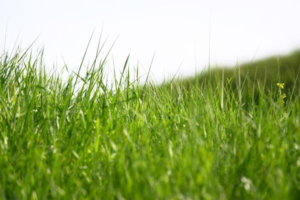 Тосканско зелено