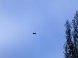 Bird-th